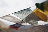 'Indian Prayer Flags Blowing In The Wind; Leh, Ladak, India'