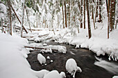 'Winter Snow Along Still Creek In Mt. Hood National Forest; Oregon, United States Of America'