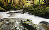 'Fast Flowing Water Over Mossy Rocks In Tollymore Forest Park; Bryansford, County Down, Northern Ireland'