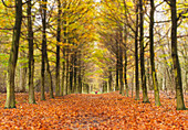 'Avenue Of Trees In Autumn; Amsterdam, The Netherlands'