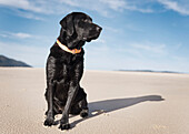 'Black Labrador Dog On Beach; Los Lances Beach, Tarifa, Cadiz, Andalucia, Spain'