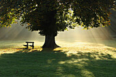 'Lone Tree In Mist And Sunlight; Cahir, County Tipperary, Ireland'