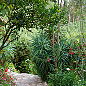 'Garden Path In Spiritual Retreat Willka T'ika; Sacred Valley Peru'