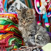 'A Kitten Sits Beside A Pile Of Colorful Fabric; Cusco Peru'