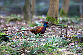 'A Bird Sits On The Forest Floor; Northumberland England'