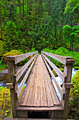 'Boardwalk Along Tanner Creek In Columbia River Gorge National Scenic Area In The Pacific Northwest; Oregon, United States of America'