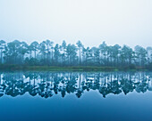 'Trees Along The Shoreline Reflected In The Tranquil Water; Pensacola, Florida, United States of America'