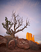 'A Tree And A Sandstone Rock Formation In The Background In Monument Valley; Utah, United States of America'