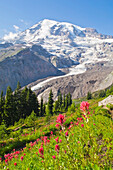 Mount Rainier, Mount Rainier National Park, Washington, Usa