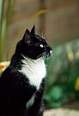 'Cat Watching; Ireland'