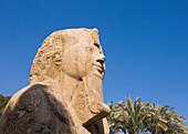 'The Alabaster Sphinx; Memphis, Egypt'