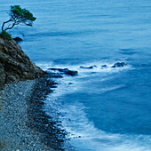 'Isolated Tree On A Cliff Overlooking A Pebble Beach Along The Coast; Benalmadena-Costa, Malaga, Andalusia, Spain'