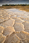 'Dried Salt Deposits From A Dried Up Water Source On The Outskirts Of Siwa At The Siwa Oasis; Siwa, Egypt'