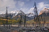 Mt. Vaux And Chancellor Peak, Yoho National Park, Bc, Canada