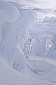 Snow Giants Are Trees Covered In Hoar Frost, Mt. Washington Ski Area, Vancouver Island
