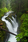 Waterfall Plunges Into A Canyon In An Old-Growth Rainforest, Sol Duc River, Olympic National Park, Washington, Usa