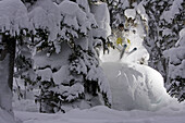 Skiing Deep Powder Through The Trees On A Stormy Day On Blackcomb, Bc, Canada