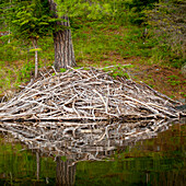 'Beaver Lodge Reflected In A Tranquil Lake; Lake Of The Woods, Ontario, Canada'