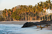 'Palm Trees Rocks And Driftwood On A Beach; Sayulita, Mexico'