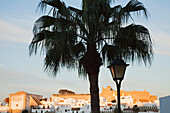 'Palm Tree And Lamp Post And The Old Town; Vejer De La Frontera, Andalusia, Spain'