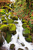 'Green moss along small waterfall;Happy valley oregon united states of america'