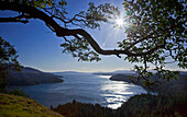 'The sun rises over an arbutus tree overlooking sansum narrows in vancouver island;British columbia canada'