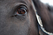 'Close Up Of A Horse's Eye; Caledon, Ontario, Canada'