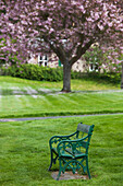 'A green metal bench in a park with a blossoming tree;Ford village northumberland england'