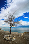 'A leafless tree stands on the edge of the dead sea;Jordan valley israel'