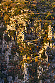 'The last rays of autumn sun highlight the twists and turns of the vradeto steps in zagoria;Epirus greece'