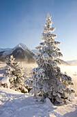 Hoar-Frost Covered Spruce Trees On Shore Of Turnagain Arm During Winter In Southcentral Alaska