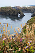 'California coastline and flowers on a foggy late afternoon;Mendocino california united states of america'