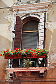 'Flowers in a window box with shutters open;Venice italy'