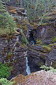 'A small waterfall in a fores;Alberta canada'