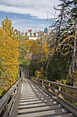 'Set of wooden steps with railing lined with trees in autumn and a city skyline in the background;Edmonton alberta canada'