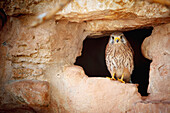 'Bird perched in the opening of a cave;Israel'
