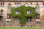 'A building with a tree growing right against the wall with the leaves spread out like a vine in a t shape;Oxford england'