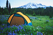 'Back country camping near the skyline trail mount rainier national park;Washington united states of america'