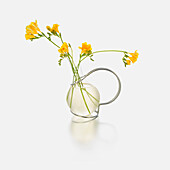 Yellow flowers in a glass vase against a white background