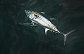 'Hooked fish in water;Boston massachusetts united states of america'