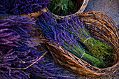 'Lavender cut and tied in bundles in a basket;Sault vaucluse provence france'