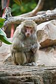 'Monkey;Adelaide australia'
