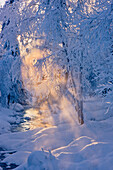 'Small stream in a hoar frost covered forest with rays of sun filtering through the fog in the background russian jack springs park;Anchorage alaska united states of america'