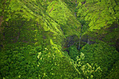 'Aerial view of a stream flowing through a lush green landscape;Hawaii united states of america'