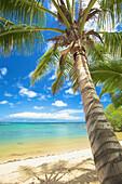 'A white sand beach and palm tree along the coast of an hawaiian island;Hawaii united states of america'