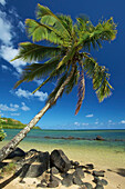 'A palm tree leaning out to the ocean against a blue sky;Hawaii united states of america'