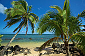 'Palm trees on the shore by the ocean against a blue sky;Hawaii united states of america'