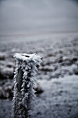 'Frost and ice cling to pole in barren landscape;Wyoming united states of america'