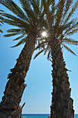 'Sunlight gleaming through the branches of two trees at the water's edge against a blue sky;Paphos, cyprus'