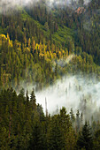 'Morning mist on a forested mountainside;Blue river, british columbia, canada'